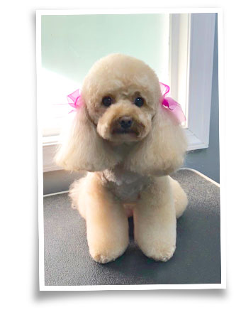 dog grooming nashville tn
