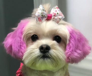 DOG & CAT GROOMING IN NASHVILLE, TENNESSEE – Pawsitively Purrfect